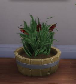 Snapdragon plant