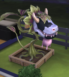Cow plant full of sim