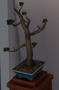 overpruned bonsai